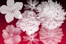 漂亮鲜花笔刷之三