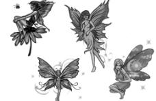 蝴蝶精灵1图片