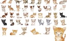 70款最具争议的小花猫图片