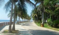 椰林小道图片