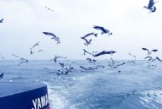 长岛风光图片