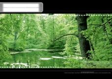 浪漫的绿色树热带雨林psd分层素材源文件背景