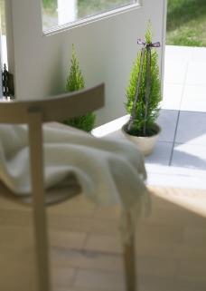 室内绿化和花草0200