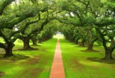绿荫小道图片