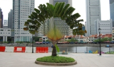 椰树造型图片