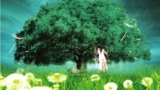 大樹與美女圖片
