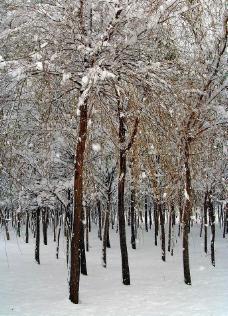 雪景如画(原创)图片