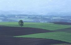 陆地旷野图片
