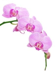 兰花高清晰度精美图片素材