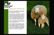 畜牧业画册内页图片