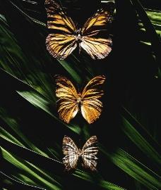 生物标本图片