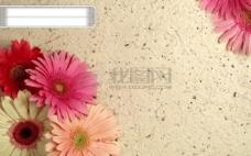 花瓣经典背景素材