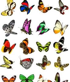 蝴蝶   美丽的蝴蝶图片