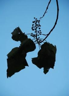 秋天的绿叶和果实图片