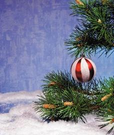 圣诞节日装饰图片