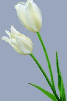 漂亮花朵图片