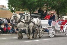 白马与马车图片