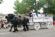 黑马与马车图片