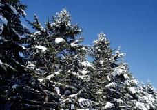 冬季盛景0038