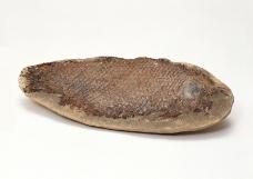 化石0073