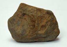化石0001
