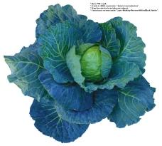 蔬果特写0031