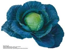 蔬果特写0032