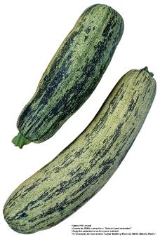 蔬果特写0028