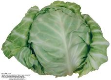 蔬果特写0033