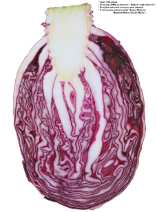 蔬果特写0035