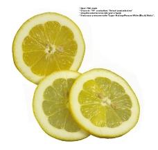 柠檬0030