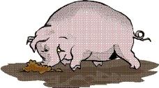 动物漫画7347