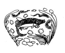 虫鱼0028