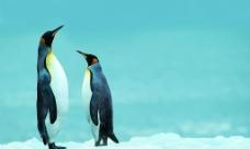 站岗的企鹅图片