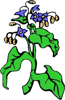 花草1529
