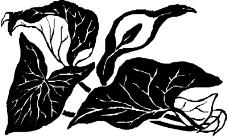 花草1651