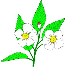 花草1771