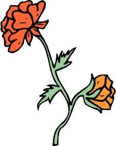 花草1366