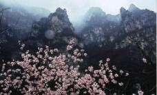 焦作神农山图片