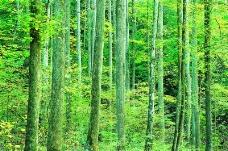 丛林之美0551