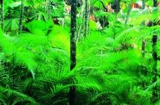 丛林之美0559