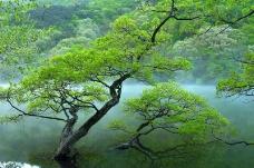 丛林之美0588
