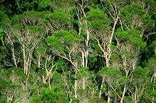 丛林之美0555