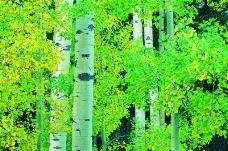 丛林之美0565