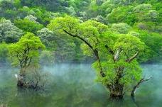 丛林之美0589