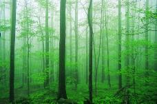 丛林之美0553