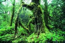 丛林之美0561