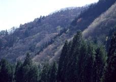 竹树婆娑0181