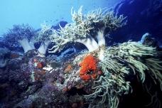 水中世界0126