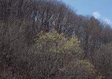 竹树婆娑0182